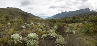 在梅里达有云彩的,委内瑞拉附近的帕拉莫风景 免版税库存图片