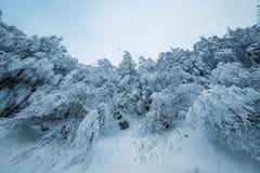 在梦想的冬天森林风景的美好的降雪 库存照片