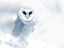 在梦想的猫头鹰 免版税库存图片