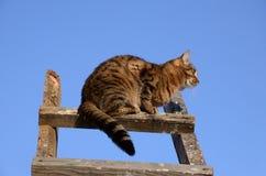 在梯子的猫 免版税库存图片