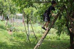 在梯子的男孩climbimg 免版税库存图片