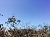 在梯度天空下的植物 库存图片