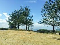 在梯度天空前面的树 库存图片