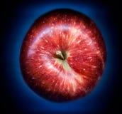 在梯度背景的红色苹果 免版税库存图片