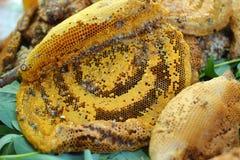在梳子的新鲜的蜂蜜 库存照片