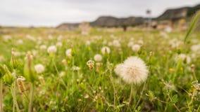 在棉花堡的草 免版税图库摄影