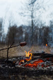 在棍子的香肠在火烤了 库存图片