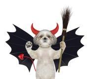 在棒恶魔服装的逗人喜爱的万圣夜狗有在白色-隔绝的笤帚的 免版税库存照片