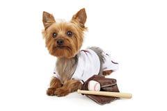 在棒球制服的逗人喜爱的Yorkie狗 免版税库存图片