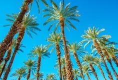 在棕榈下 免版税库存照片