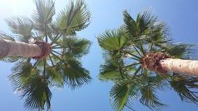 在棕榈下 库存照片