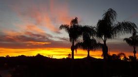 在棕榈中的日出 库存图片