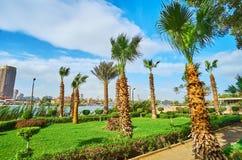 在棕榈中走在开罗,埃及 免版税库存照片
