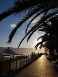 在棕榈之间的太阳 免版税库存图片