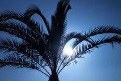 在棕榈剪影天空后的日落 免版税库存照片