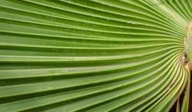 在棕榈叶的可折叠 免版税库存照片