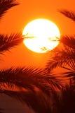 在棕榈叶的日出 红海 免版税库存照片