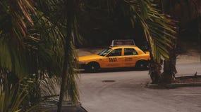 在棕榈叶的黄色出租汽车 库存照片