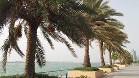 在棕榈季节的棕榈树 股票录像