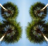 在棕榈树下看法  免版税库存照片