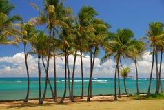 在棕榈树中的热带微风在考艾岛 库存照片