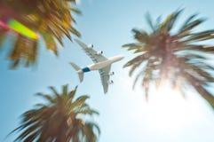 在棕榈树之上的空中飞机。 库存图片