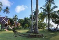 在棕榈树之间的一个吊床在草坪在热带庭院里 图库摄影