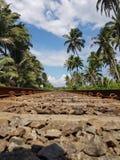 在棕榈树之间的铁路 免版税库存图片