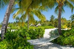 在棕榈树之间的吊床在马尔代夫的热带海滩 免版税库存照片