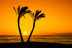 在棕榈树之间的太阳 库存图片
