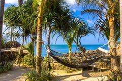 在棕榈树之间的空的吊床在热带海滩 图库摄影