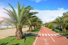 在棕榈树之间的红色自行车轨道在海滩 免版税库存照片