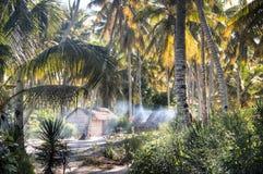 在棕榈树之间的非洲村庄在Tofo 库存图片