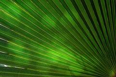 在棕榈树叶子的阳光 免版税库存图片