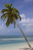 在棕榈树水的蓝色 库存图片