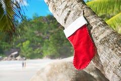 在棕榈树的圣诞节袜子在异乎寻常的热带海滩 免版税库存图片