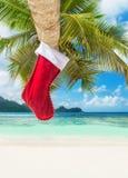 在棕榈树的圣诞节袜子在异乎寻常的热带海滩 免版税库存照片