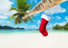 在棕榈树的圣诞节袜子在热带海洋海滩 免版税库存照片