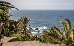 在棕榈树的壮观的看法向大西洋 库存照片