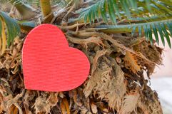 在棕榈树的心脏形状 库存图片