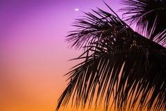 在棕榈树的日出 免版税库存图片