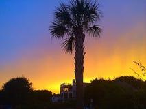 在棕榈树的日落 免版税库存图片