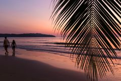 在棕榈树的热带日落 图库摄影
