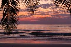 在棕榈树的热带日落 免版税库存照片
