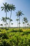在棕榈树的风景看法在热带海岛布巴克,一部分上的Bijagos群岛,几内亚比绍,非洲 库存照片