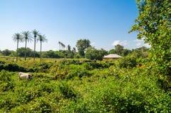 在棕榈树的风景看法在热带海岛布巴克,一部分上的Bijagos群岛,几内亚比绍,非洲 免版税库存照片