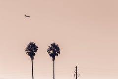 在棕榈树的飞机 免版税图库摄影