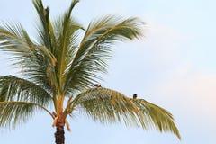 在棕榈树的鸟 免版税库存图片