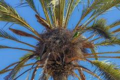 在棕榈树的鸟 库存照片