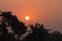 在棕榈树背景的日落  免版税库存图片